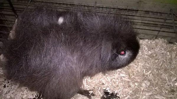 Voici Hagrid