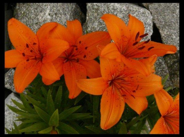fleurs exotiques orange. Black Bedroom Furniture Sets. Home Design Ideas