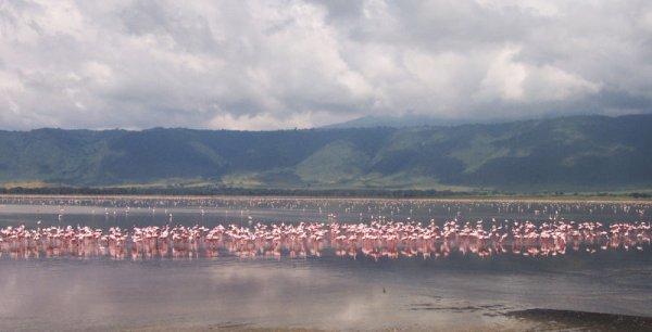 LE CRATERE DE NGORONGORO (Tanzanie)