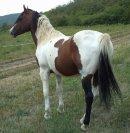 Photo de passion-chevaux950