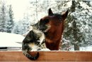 Photo de Horse-Diaries