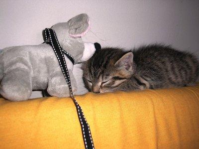 mon petit chat d'amour =)