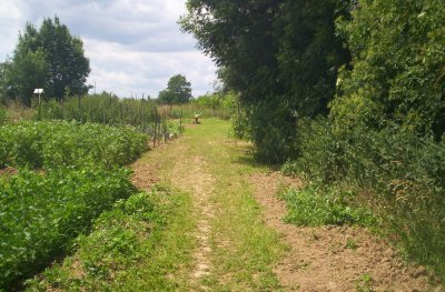 deux jardins pour potager: un de 2 ares et l'autre de 8 ares...