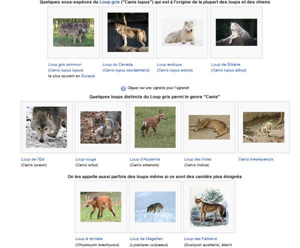 Espèces et sous-espèces de loups