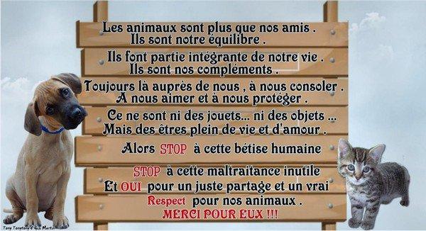 "Chanson anti-fourrure: ""C'est ma peau"" (Stéphanie Valentin)"