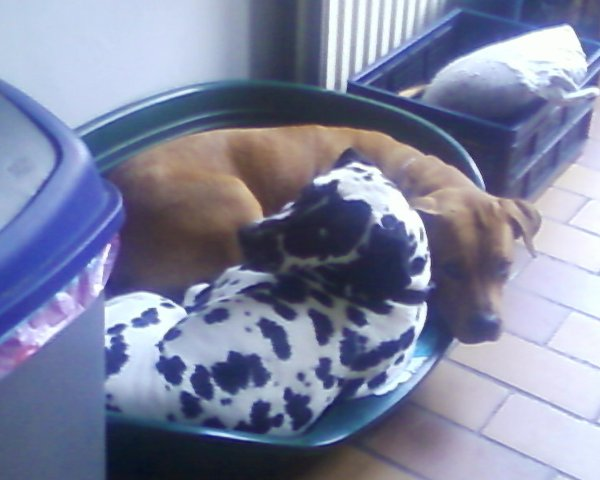 Kinah et Bobby ( le chien de mes parents )