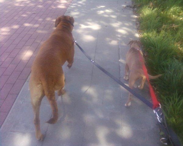 Kinah et Sisko ( un chiot dont j'ai du me séparer )