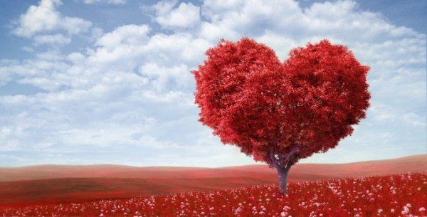 l'amour