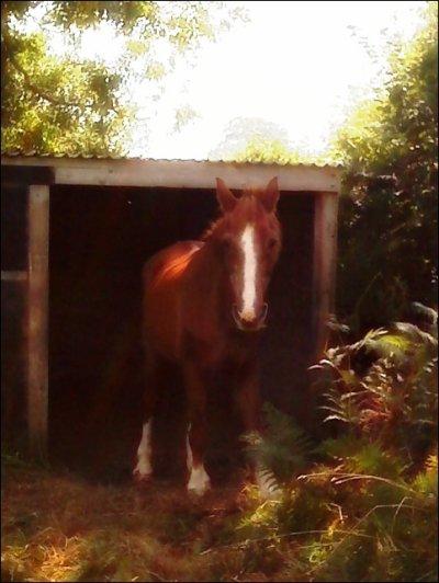 Petit, poney, petit poney, tu es tout gris et tout petit, petit poney :P