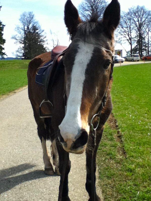 Mon cheval &. moi
