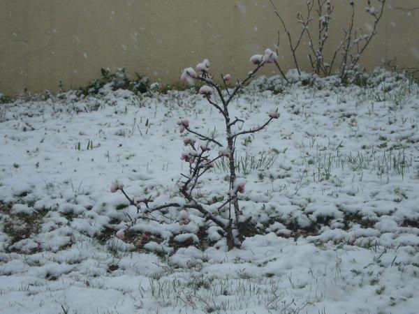 La neige est revenue....