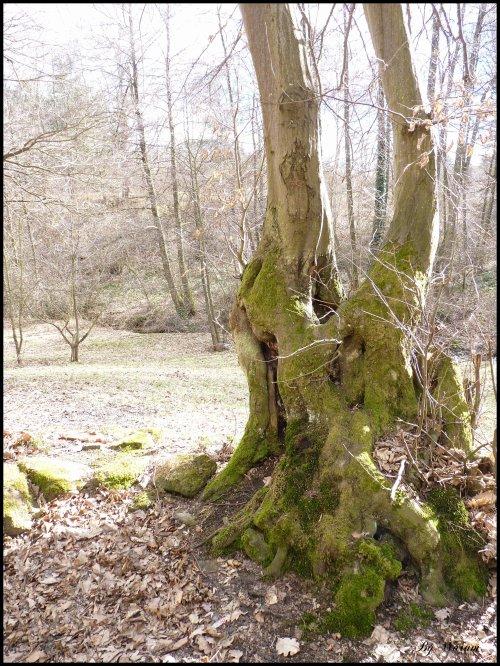 """""""Parfois, un arbre humanise mieux un paysage que ne le ferait un homme.""""   Gilbert Cesbron"""