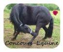 Photo de Concours-Equine
