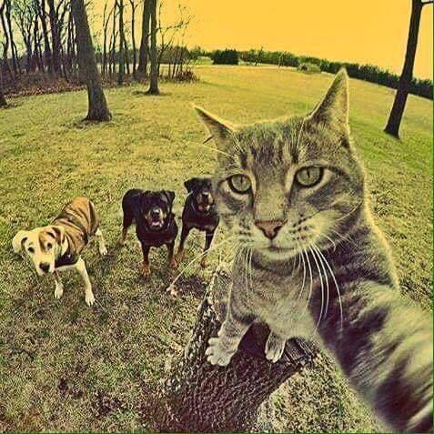 Hahaha  that's nice  selfie ptdr :p