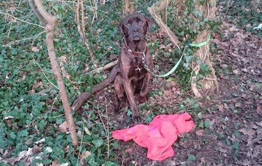 Chien abandonné dans la forêt de Bréviande - Les créoles ont la parole