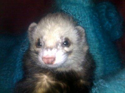 mon bebe gribouille