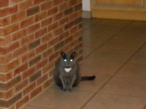 Mon chat en mode robot !! ptdr