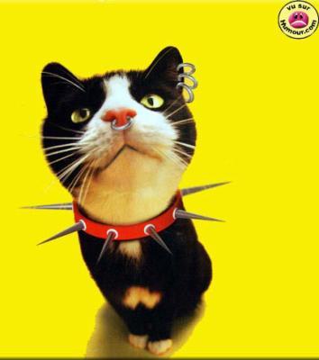 Chaton punk animaux marrant - Chaton marrant ...