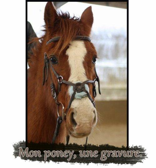 """"""" Mon poney la plus Belle. """""""