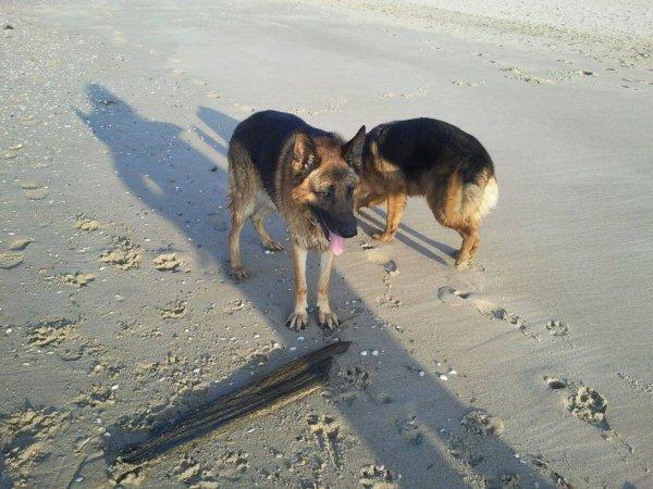 [ Hélios ] & [ Junior ] à la plage