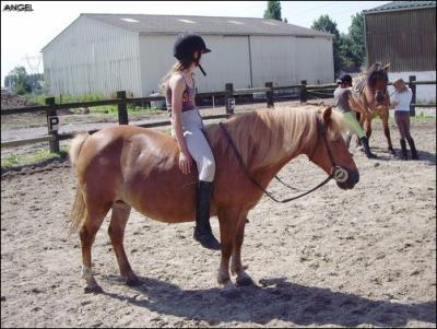 poney 07