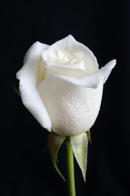 Une Fleur Blanche Map Titecampagne