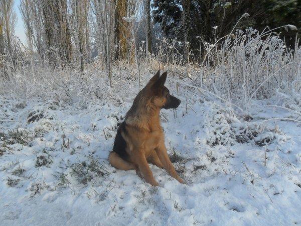 """[ Junior ] & [ Hélios ] suite """"la neige"""" ..."""