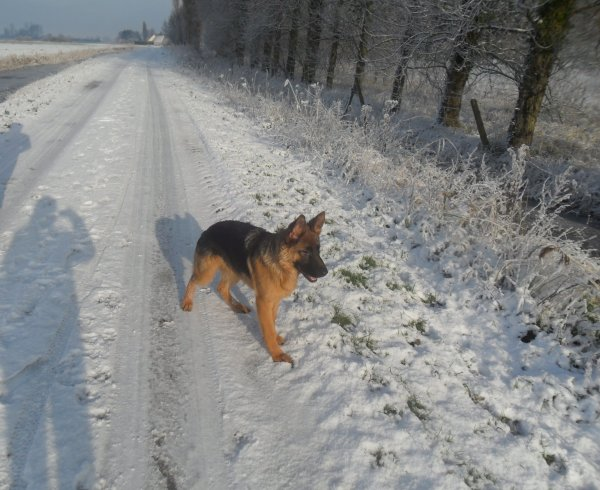"[ Junior ] & [ Hélios ] ""la neige"" ..."