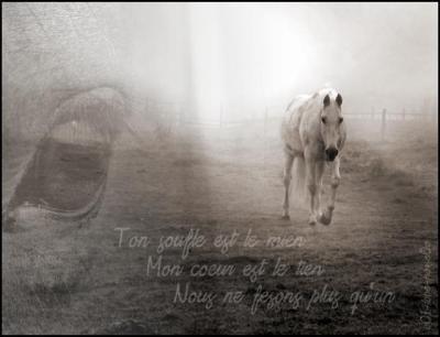 ~Un cheval n'appartient a personne il est sont propre maître! ~