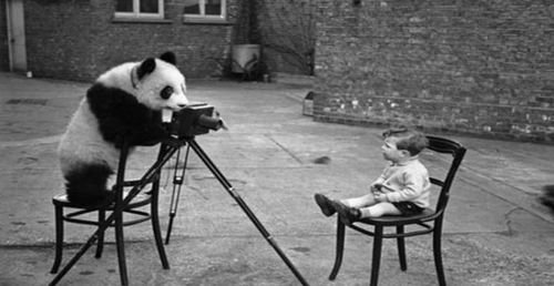 Panda... Raciste ?