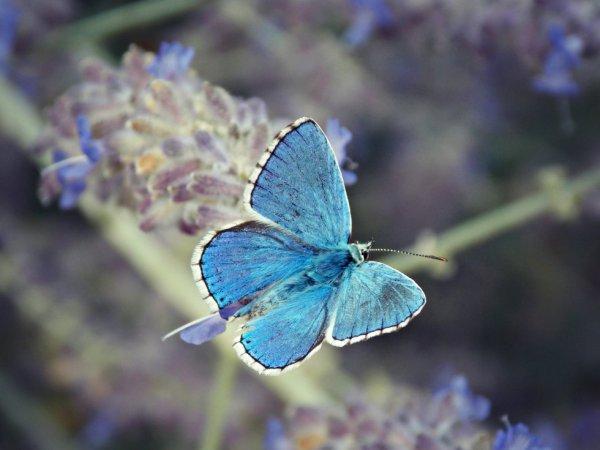 butterfly♥