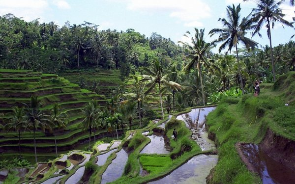 L'Asie / Le Bali