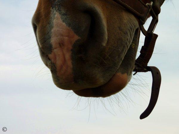 Les chevaux sont des créatures mystérieuses, ou divines.    Proverbe Indien