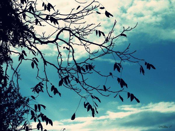Ce qu'il y a parfois de beau avec l'automne, c'est lorsque le matin se lève après une semaine de pluie, de vent et brouillard et que tout l'espace, brutalement, semble se gorger de soleil.    [Victor-Lévy Beaulieu]