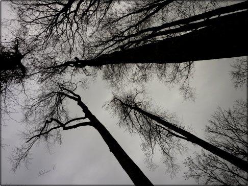 C'est seulement quand l'hiver est arrivé qu'on s'aperçoit que le pin et le cyprès perdent leurs feuilles après tous les autres arbres.