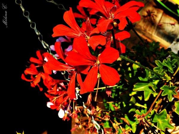 La patience est une fleur qui ne pousse pas dans tous les jardins.   [John Heywood]