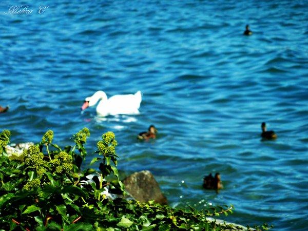 Il vient un âge où le bonheur semble se retirer de la vie, comme ces lacs qu'un été trop long rétrécit entre leurs rives.   [Paul-Jean Toulet]