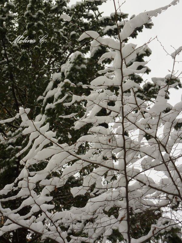 Hiver rigoureux. Un hiver où règne une température hivernale. Alain Schifres