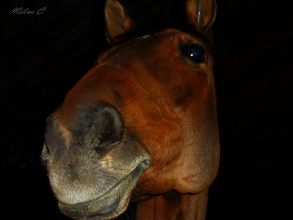 BLOG DE PHOTOGRAPHIES EQUESTRE ICI !