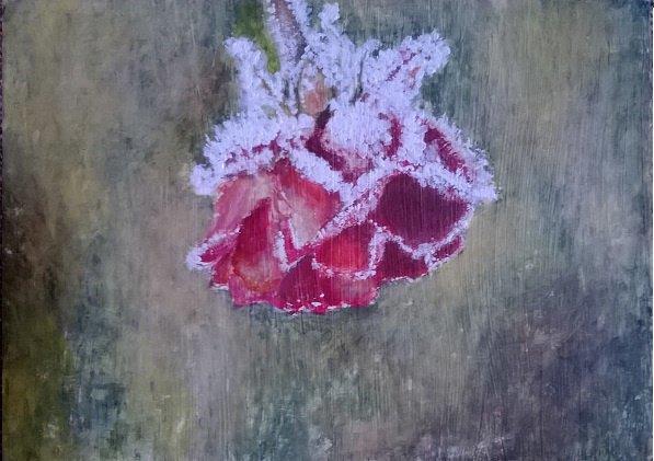 rose avec de la neige