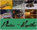 Photo de Photos-Reptiles