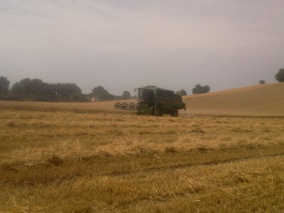 moisson de blé tendre