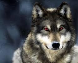 Une louve solitaire, qui devient une louve de meute.