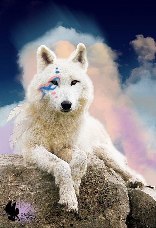 Oc louve 3 (les photo sont prise sur internet) Mey Fang