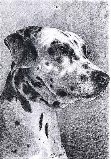 .....Journal d'un chien....