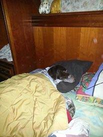 mon chien zeus il avait froid
