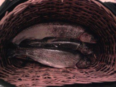 ouverture de la truite 2011