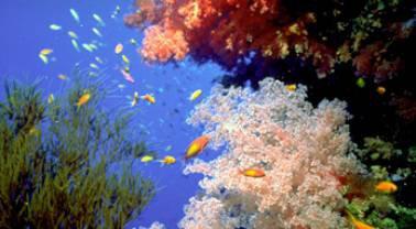 L'école de plongée sous-marine