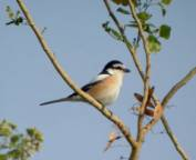 Routes de migrations des oiseaux