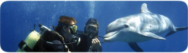Dolphin Reef - Attractions